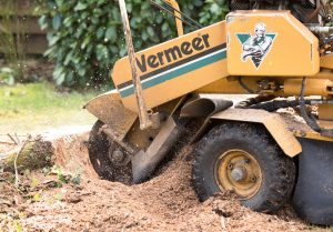 How to Tell Your stump grinder teeth Needs A Replacement